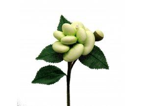 Bohatá růže zelenkavá