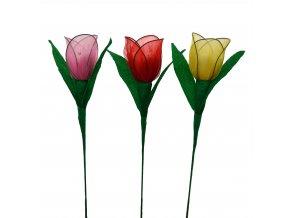 Luxusní tulipán s mandlemi